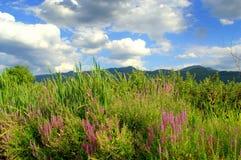 Summer country nature abundance Royalty Free Stock Image