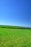 Summer country view Royalty Free Stock Image