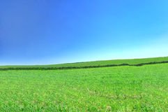 Summer country view Stock Photography