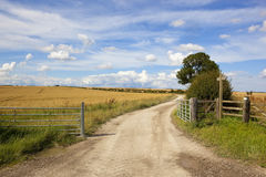 Summer country walking Royalty Free Stock Images