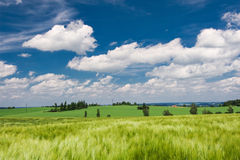 Summer countryside Royalty Free Stock Image