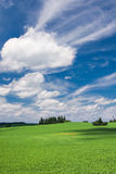 Summer countryside Stock Image