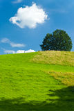 Summer countryside landscape. Scenic landscape of summery countryside with tree, blue sky and cloudscape royalty free stock photos