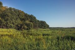 Summer countryside lush green wetland forest landscape at sunrise stock photography