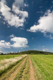 Summer countryside with road through green pasture Royalty Free Stock Images