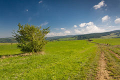 Summer countryside with road through green pasture Stock Photography