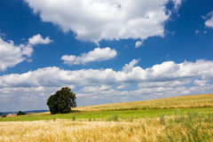 Summer countryside with solitaire tree Royalty Free Stock Photography