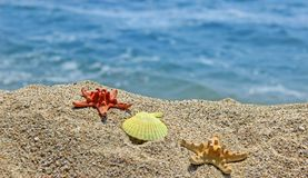 Summer creation on the beach with sea natural creatures. Amazing natural sea creatures at the sandy beach Stock Image