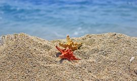 Summer creation on the beach with sea natural creatures. Amazing natural sea creatures at the sandy beach Royalty Free Stock Images