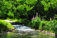 Summer creek. Has taken a beautiful creek in pleasant summer day stock photos