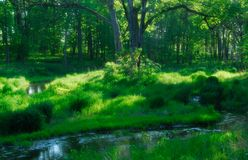 Summer creek. Arboretum Park at Lisle, IL. USA royalty free stock images