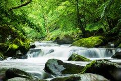 Summer creek in Austria. Summer creek in low Austria royalty free stock photos