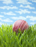 Sports Cricket Ball Grass Background. An old cricket ball on grass and sunny summer sky background Stock Photography