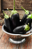 Summer crop of aubergine Royalty Free Stock Images