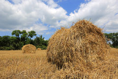 Summer crop field with hay rolls Royalty Free Stock Image