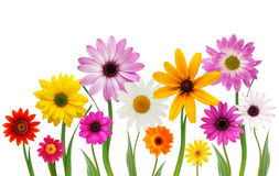 Free Summer Daisies Stock Images - 5340004