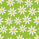Summer daisies seamless vector pattern Royalty Free Stock Photos