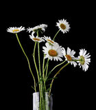 Summer Daisies in Vase Royalty Free Stock Photo