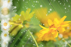 Summer, Daisy, Yellow Flower Background. Summer or spring background with bright, colorful green stems, daisy and yellow flowers, sparkles Stock Photos