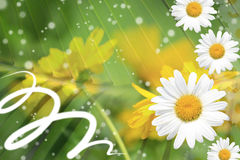 Summer, Daisy, Yellow Flower Background. Summer or spring background with bright, colorful green stems, daisy and yellow flowers, sparkles Royalty Free Stock Images