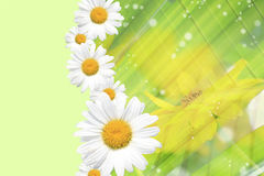 Summer, Daisy, Yellow Flower Background. Summer or spring background with bright, colorful green stems, daisy and yellow flowers, sparkles Royalty Free Stock Image