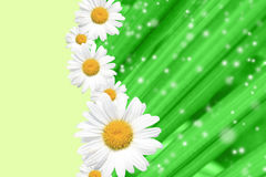 Summer, Daisy, Yellow Flower Background Royalty Free Stock Photos