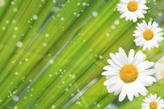 Summer, Daisy, Yellow Flower Background. Summer or spring background with bright, colorful green stems, daisy and yellow flowers, sparkles Stock Photo