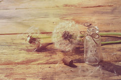 Summer dandelion on wooden table Royalty Free Stock Photos