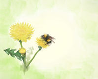 Summer dandelions Royalty Free Stock Images