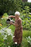 Summer day. Grandmom is watering the flowers in her garden royalty free stock image