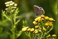 Summer day. The butterfly on a summer meadow Royalty Free Stock Photography