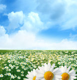 Summer day Royalty Free Stock Photography