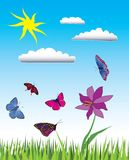 Summer day. Vector illustration of many butterflies in green meadow Stock Image