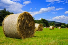Summer day. Picture of a meadow with hay Royalty Free Stock Image