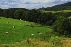 Summer day. Picture of a Czech country side Royalty Free Stock Images