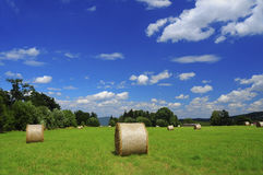 Summer day. Picture of a meadow with hay Stock Photo