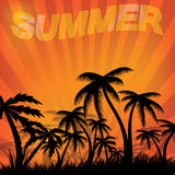 Summer day background with palm tree. Stock Photos