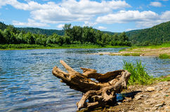 Summer day on the banks of a beautiful river under the blue sky. Stock Photography