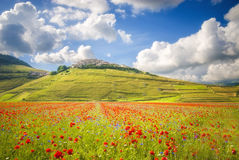 Summer day in the beautiful and colorful area of Castelluccio di Stock Photo
