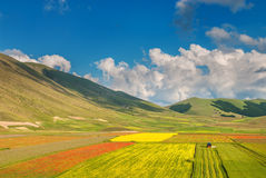 Summer day in the beautiful and colorful area of Castelluccio di Royalty Free Stock Image