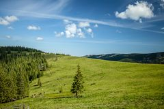 Summer day in Carpathian mountains Stock Image