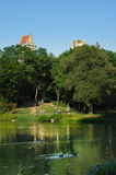 Summer day in central park Stock Photography