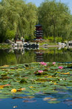 Summer day in the Chinese garden. Royalty Free Stock Photos