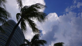 Summer day cloudy blue sky palm tops moving 4k time lapse florida usa. Usa summer day cloudy blue sky palm tops moving 4k time lapse florida stock video