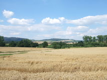 Summer day in the country. Beautiful sunny day, wheat field Royalty Free Stock Photos