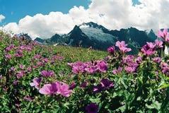 Summer day.Dombai. Landscape nature.Dombai.Summer.Caucasus Stock Photos