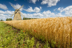 Summer day in ecologically clean region of Europe Stock Image