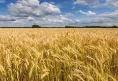 Summer day in ecologically clean region of Europe Royalty Free Stock Images