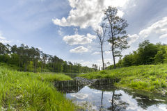 Summer day at a forest lake Stock Images