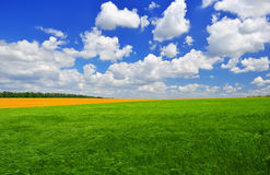 Summer day on the green field Royalty Free Stock Image